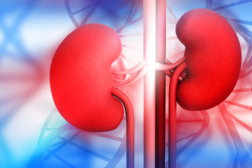 Rare Kidney Diseases You Should Know About